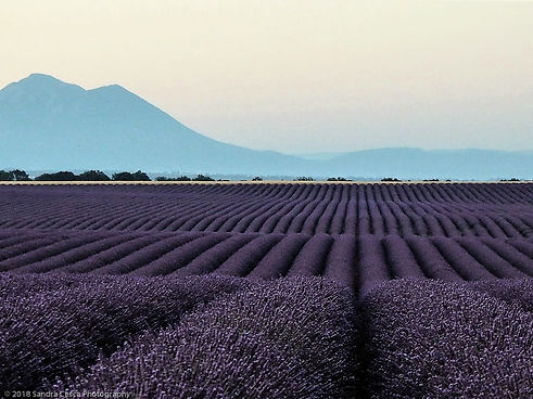 French lavender field  4 (1 of 1).jpg