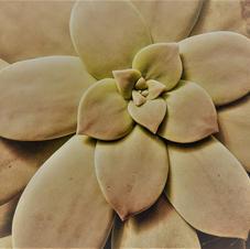 Cactus d.jpg