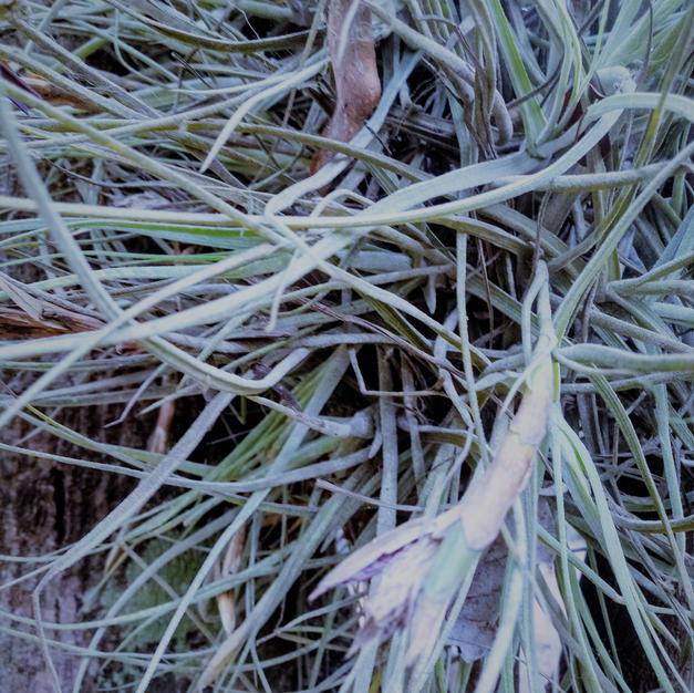 Spidery plant b.jpg