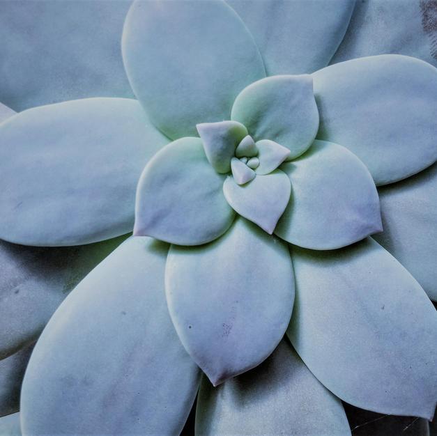 Cactus a.jpg
