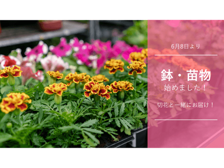 待望の「鉢物・苗」の販売がスタート!