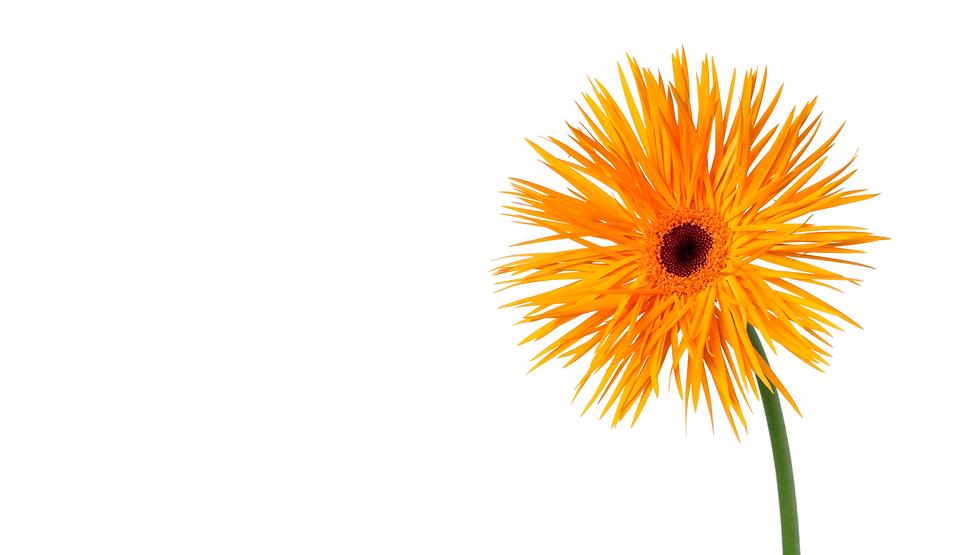 切花の仕入れサイト・ハナスタ メイン画像