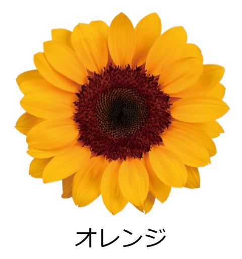 オレンジ かわいらしい花びら。温かみのあるオレンジ色