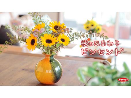 秋のアレンジにヒマワリ「ビンセント ®」を!