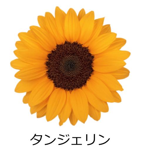タンジェリン すっきりしたシャープな花びら。深みのあるオレンジ色