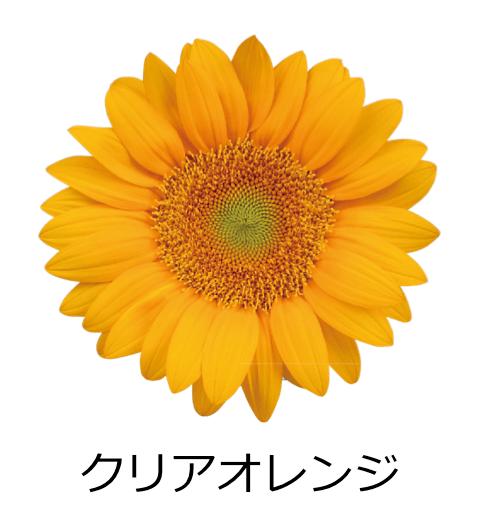 クリアオレンジ ゴージャスな花びら。爽やかなオレンジ色で、花の中心が緑色
