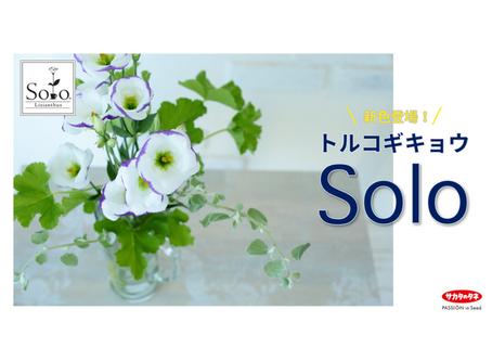 新色登場!トルコギキョウ「ソロ® PF」