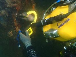Dive survey.jpg