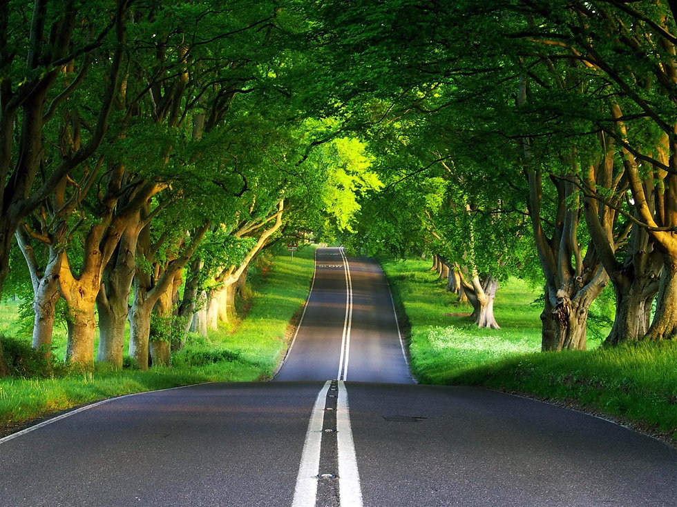 tree and road.jpg