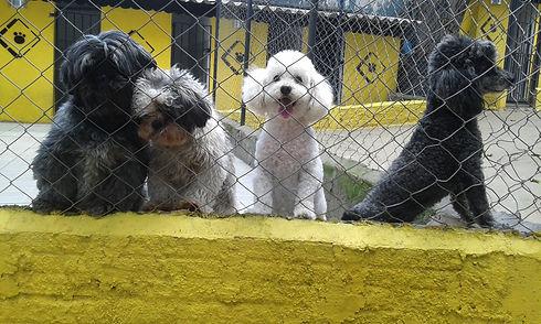 Hotel para cães do Empório dos Animais