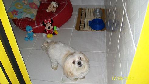 Canil do hotel para cães do Empório dos Animais