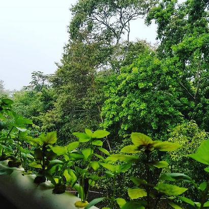 basil hydroponics.jpg