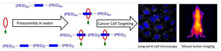 tumor targeting.png