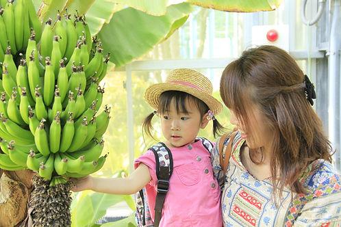 バナナ温室 (2).JPG