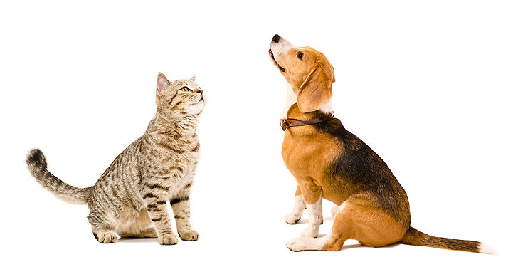 Vet Orthopaedic surgery for dogs and cats