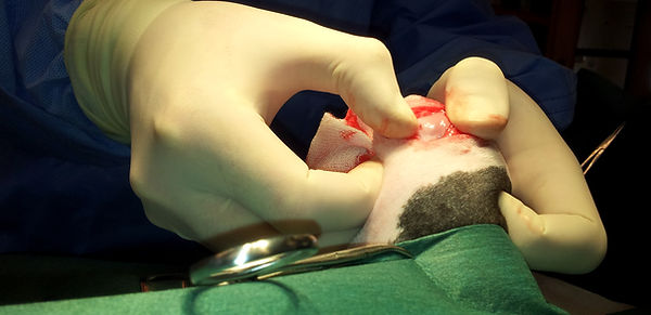 patella luxation surgery dogs ireland