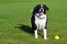 Cruciate ligament surgery in dog Ireland