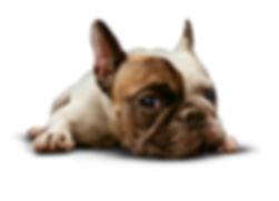 patella scoring dogs ireland