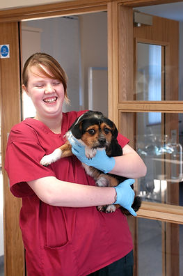 In patient vet nursing care