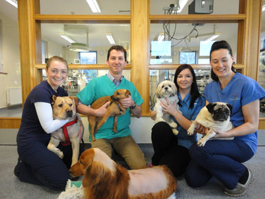 Group of canine vet spinal surgery cases