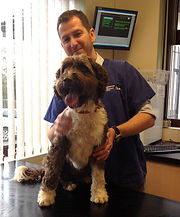 Ash pet dog after orthopaedic referral surgery from broken leg and dislocated hip