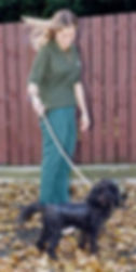 Poodle dog walking after spinal vet surgery