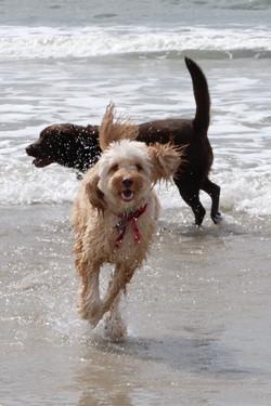 Dog Friendly Beach on Oak Island