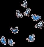 butterflies_edited.png