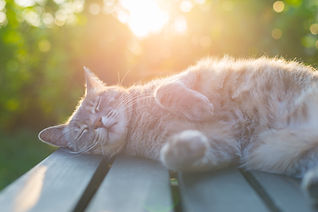 Playful domestic cat lying on wooden ben
