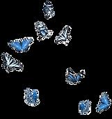 butterflies%20flip_edited.png