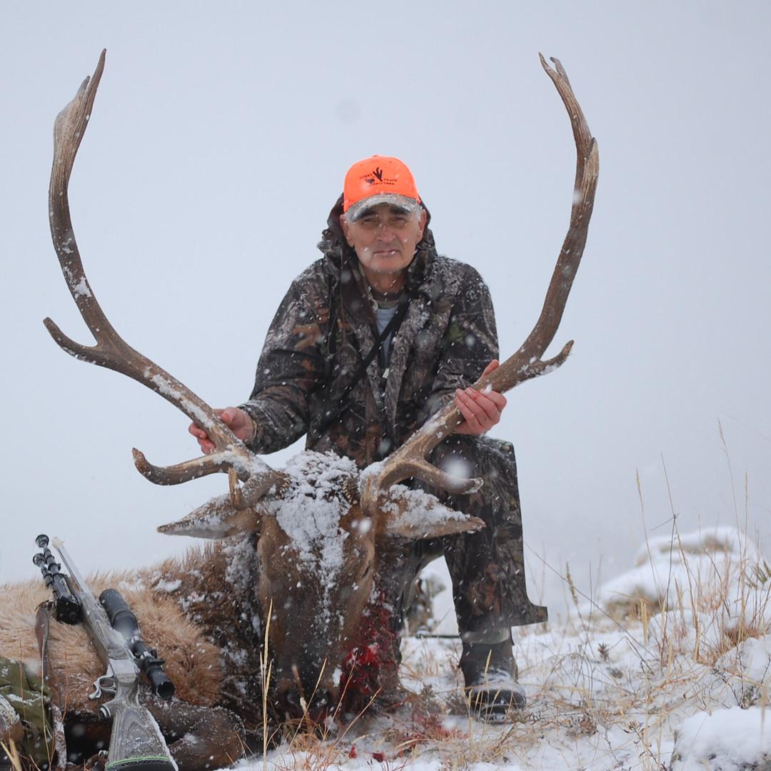 Elk (217).JPG