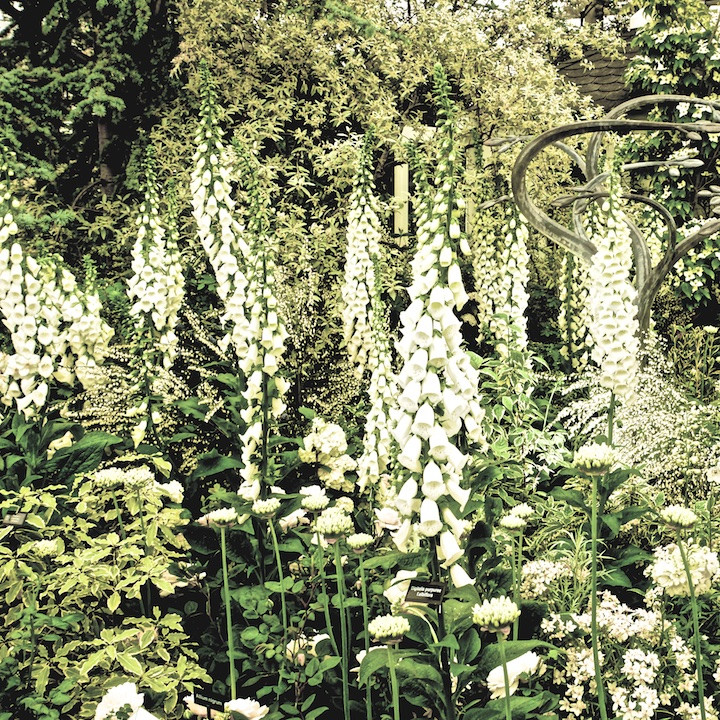 Garden in white.jpg