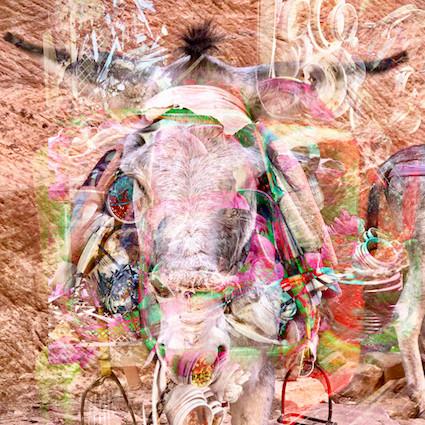 lucky donkey.jpg