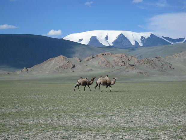 mongolia-590800_1280.jpg