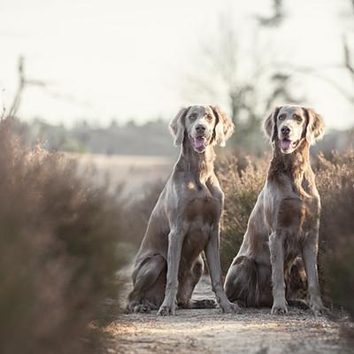 Fotoschoot Dog Portrait