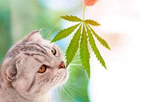 The Facts About CBD For Cats