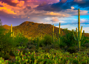 The Sonoran Experience: Healing From The Desert