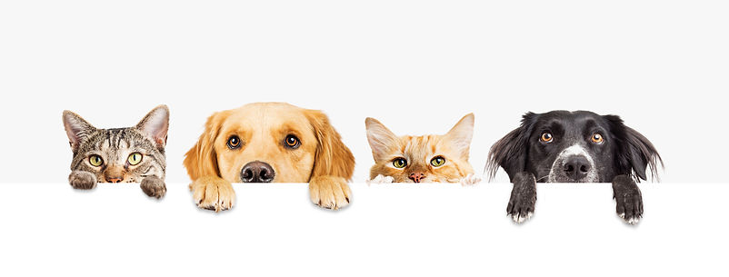 Row of the tops of heads of cats and dog