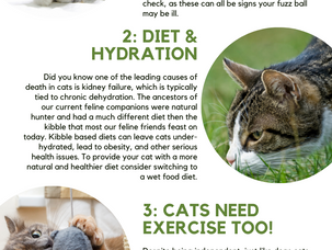 4 Useful Tips For Watching Your Cat's Health
