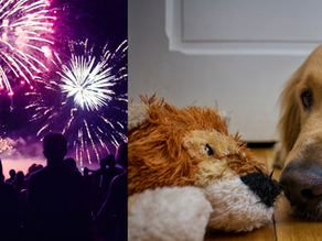 4 Easy Tips to Reduce Your Pet's Anxiety on 4th of July