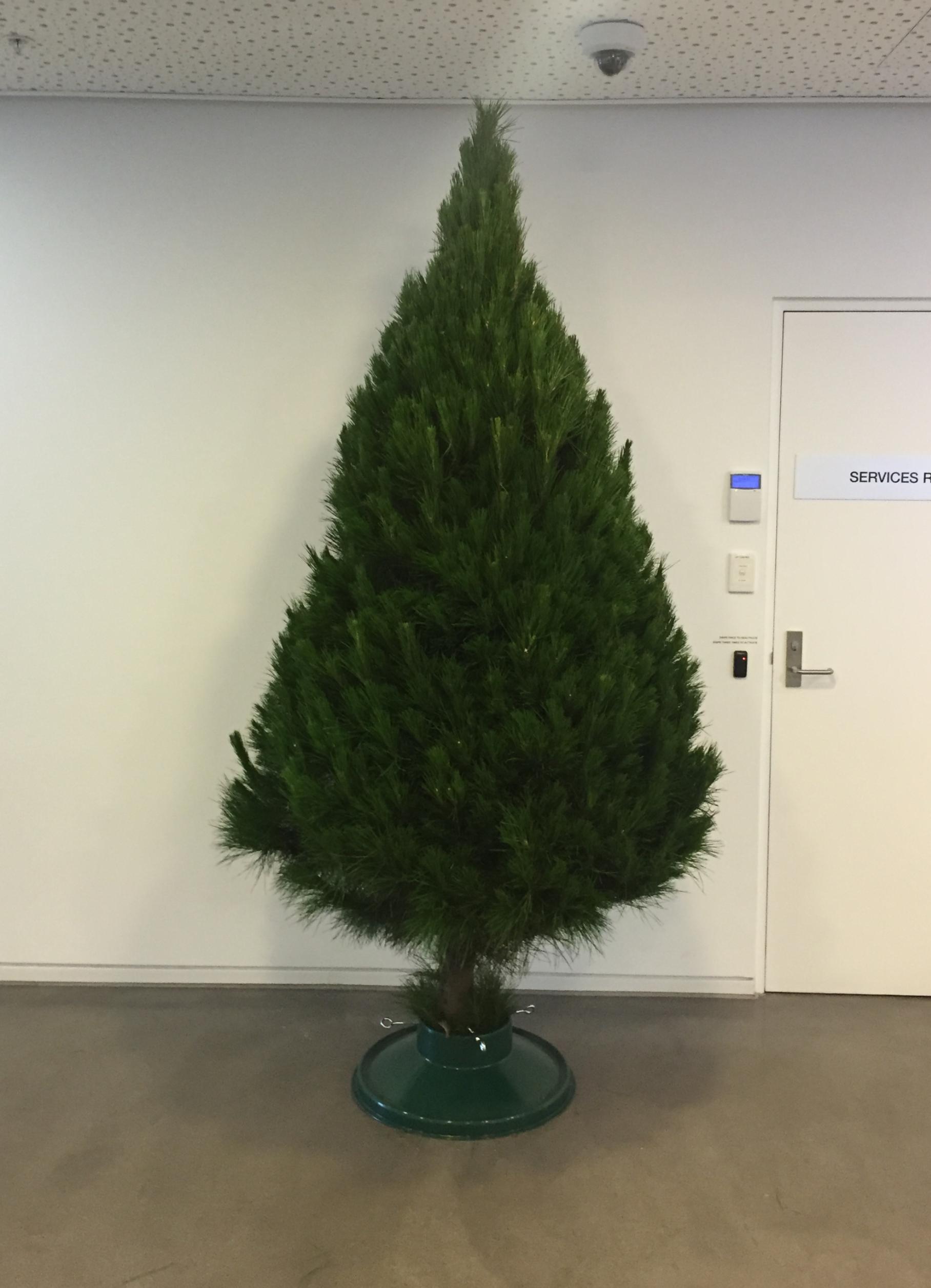 8' Bare Real Christmas Tree