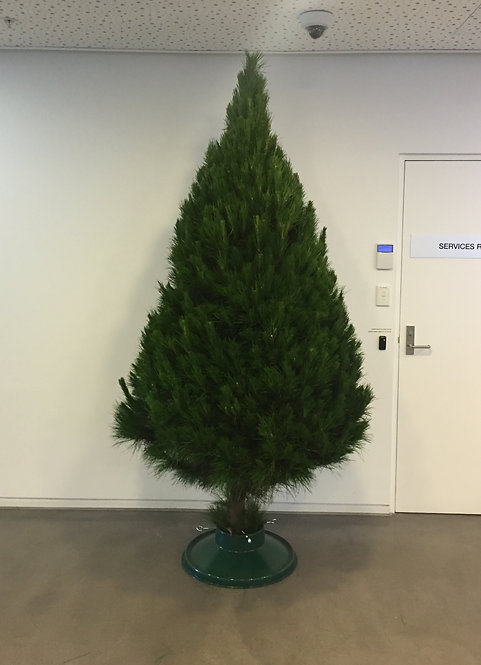 9 Foot Bare Tree Package