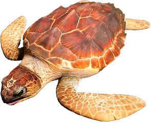 SeaTurtle_edited_edited.png
