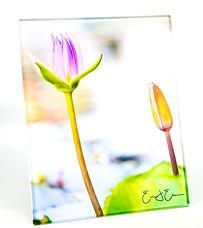 Glass Lotus.jpg