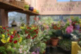 greenhouse view 5-20d.jpg