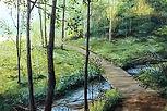 Tranquil Trail.jpg