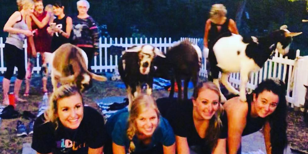 BYOB Sunset Goat Yoga  & Goat Fun!
