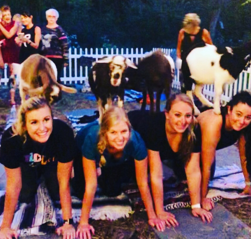Our Assistant Goat Yoga Instructors love to hop on backs in cat-cow pose during Goat Yoga in Chicago!