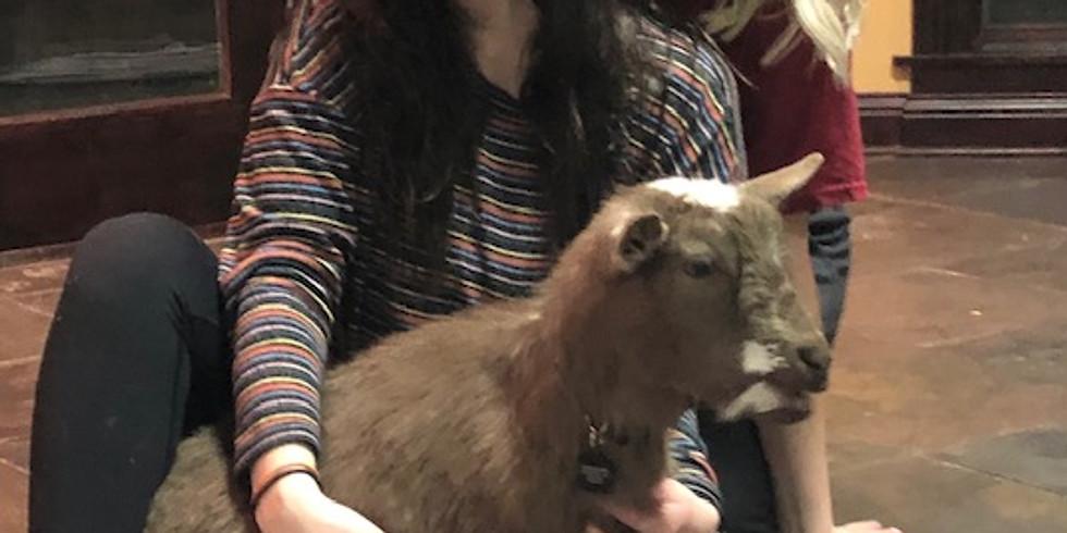 Goat Yoga  & Goat Fun!                               (1)