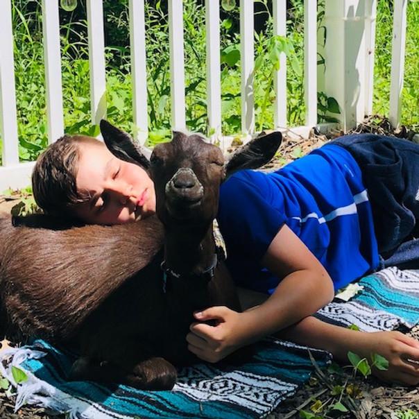 Restorative Goat Yoga